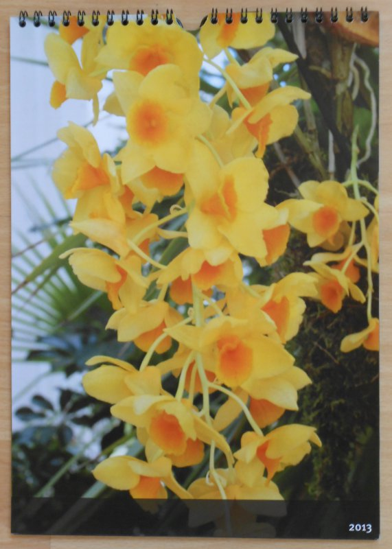 beautiful flower calender orchids